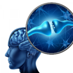 Serotonina e a comunicação entre os neurônios
